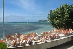 Conch Caribbean.JPG