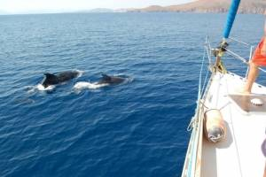 meezeilen met dolfijnen